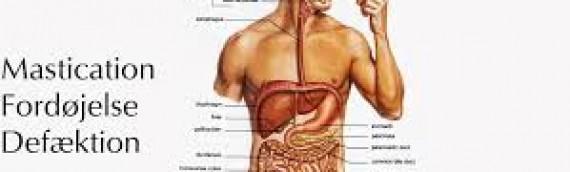 Få ro i maven med FODMAP-diæten